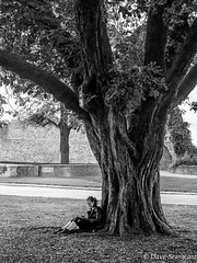 I read anywhere (daveseargeant) Tags: rochester castle medway tree autumn monochrome street white black nikon df 50mm 18g