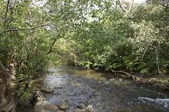 DSC_0002 (danavarroli) Tags: landscape nature trees water creek flowing