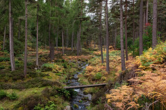 The Footbridge (Geoff France) Tags: scotland highlands scottishhighlands tulcan tulcanestate stream brook burn ghyll wood forest trees autumn footbridge landscape scottishlandscape