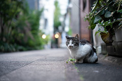 猫 (fumi*23) Tags: ilce7rm3 sony street sonnar sel55f18z 55mm sonnartfe55mmf18za katze neko cat chat a7r3 animal alley zeiss ねこ 猫 ソニー 路地