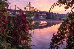 train at sunrise (phlickrron) Tags: donau bridge sunrise train outdoors reflection water pink tree hiking