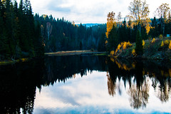 Calm Autumn (langdon10) Tags: autumn countryside norway rotnes calm forest leaves pond stream tree