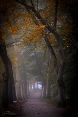 autumn avenue (judith.kuhn) Tags: natur nature trees bäume herbst aurtumn fall allee avenue laub foliage weg trail äste branches mainau pflanzen plants