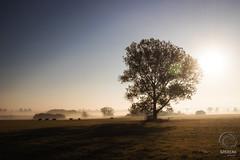 Visions (mkarwowski) Tags: sunrise morning outdoor poland countryside field autumn fall podlasie easternpoland