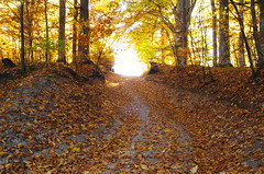 Road to light (Baubec Izzet) Tags: baubecizzet pentax light nature autumn leaves trees