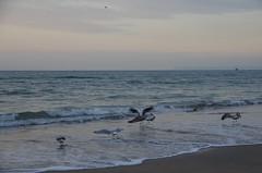 JLF16324 (jlfaurie) Tags: deauville normandie normandy france francia dqaniel mariefrance louisette mechas mpmdf jlfr jlfaurie pentax k5ii plage playa beach seaside mer mar sea