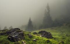 The Glow (Netsrak) Tags: alpen alps baum berg bäume europa europe landschaft natur nebel wald fog landscape mist mountain nature woods