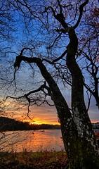November morning, Norway (Vest der ute) Tags: g7xm2 g7xll water landscape lake trees tree sunrise sky clouds grass leaves haugesund norway rogaland eivindsvatnet morning autumn fav25 fav200