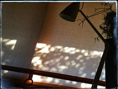 Morning bokeh (YAZMDG (16,000 images)) Tags: light bokeh morninglight potplant plant succulent blind pattern