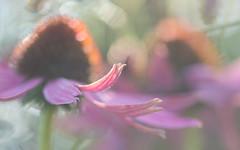 juggling light (Emma Varley) Tags: flowers light bokeh juggling balls sussexprairiegarden