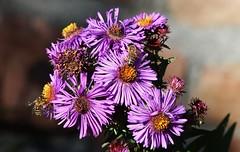 Flower (Hugo von Schreck) Tags: hugovonschreck flower blume blüte canoneos5dsr tamron28300mmf3563divcpzda010 greatphotographers