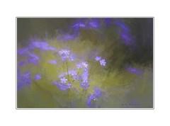 Dream with me (Krasne oci) Tags: flower painterly forgetmenot evabartos dream romance love flowers poetry