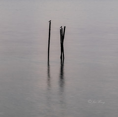 Two Birds (jacysf) Tags: birdsonstilts morning birds pasirrispark reflections throughherlens