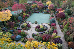 Garden colours after autumn frost. (Four Seasons Garden) Tags: four seasons garden england english uk walsall foliage leaves 2017 autumn marie tony newton acer japanese maple evergreen red blue yellow green conifer colour deciduous wisteria palmatum grass air frost azalea