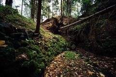 Geheimer Tunnel im Wald (Gruenewiese86) Tags: harz nebel regen wald waldlandschaft hütte hüttenübernachtung forest forst wipfel waldboden wurzeln naturschutz umweltschutz frisch ökosystem laubwald hoch hellgrün grün botanik baum öko idyllisch laub baumstamm umwelt froschperspektive äste sauerstoff naturwald sicht gros flora bergwald naturfoto naturpark baumwipfel landschaft blätter baumkrone urwald untersicht wälder stimmungsvoll drausen blatt zweige natur frische wurzelwerk holz tier park germany