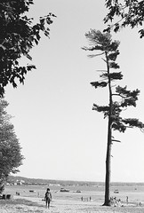 0001140-R1-E012 (gracito14) Tags: yashica fx3 super2000 fujifilm acros 100 blackwhite blackandwhite bw film slr north beach burlington vermont lake champlain tree