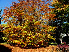 18 10 27 Autumn colous Wellington Road (pghcork) Tags: cork ireland irelandsancienteast wildatlanticway autumn autumncolour october 2018 colours