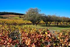 """""""Climat de Bourgogne"""" (Mamyarason) Tags: extérieur vineyard côtedor vigne régionbourgognefranchecomté mamyramiarason france fixin paysage autumn vignoble automne nikond750 burgundy vignobledebourgogne"""