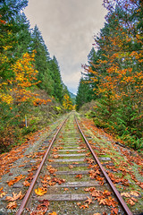 Autumn Series (Per@vicbcca) Tags: autumn sony ilce7m2 a7ii vancouverisland britishcolumbia canada shawniganlake color colour colores enrailway maple leaves