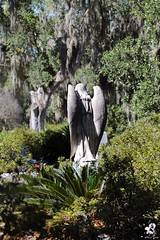Spanish Moss and Angel Wings (zeesstof) Tags: zeesstof vacation photoassignment georgia savannah bonaventurecemetary graveyard