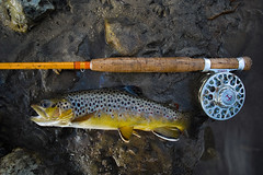 Spring Coulee Brown Trout (thart2009) Tags: driftlessarea browntrout foveon x3 sigmaquattrodp1 thart2009 wisconsin sigmadp1quattro flyfishing redingtonbutterstick