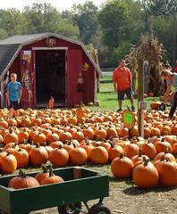 Halloween Dussel Farm DSC07703 (kurmanstaff) Tags: kurmanphotography halloween dusselfarm kentohhalloween halloween2018 pumpkinsandsquash outdoorfestival