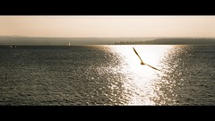 the white sun rises (dieforice) Tags: bodensee cinematic light sunlight bird lake sonya6000 germany water sky