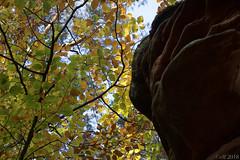 Fels und Laub (leaving-the-moon) Tags: 2018 201810 autumn bäume deutschland deutschlandgermany forest germany herbst natur nature pfalz pfälzerwald rlp trees trekking wald wanderung wood foliage blätter colorsofautumn