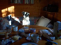 44/52 Breakfast with Buba (frau_k) Tags: 52weeksfordogs18 buba k ootb
