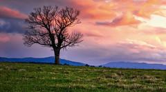 Look At Me. (williams.darrell53) Tags: landscape nature cloud sun light australia canon color colour