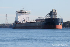 ainnov92918_rb (rburdick27) Tags: algoma algomacentral stclairriver selfunloader equinoxclass