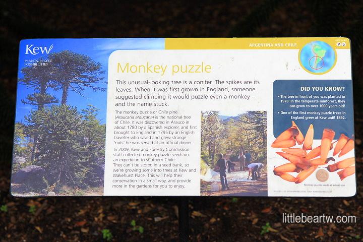 邱園Kew Gardens-48