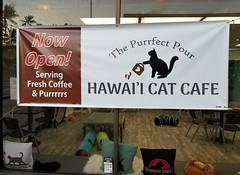Hawaii Cat Cafe (Tabo Kishimoto) Tags: hawaiicatcafe oahu cats gato chat popoki neko katzen catcafe adoptacat