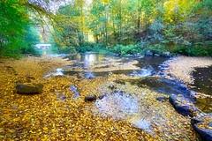 Come into my wonderland.... (Tobi_2008) Tags: wald forest bach wasser water bäume trees herbst autumn sachsen saxony deutschland germany allemagne germania