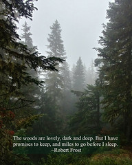 The Woods are Lovely, Dark and Deep (The Thirsty Wanderers) Tags: woodland forest washington fog pinetrees robert frost
