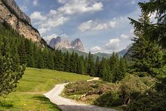 Taglio del bosco (cesco.pb) Tags: valdifassa valcontrin dolomiten dolomiti dolomites alps alpi canon canoneos60d tamronsp1750mmf28xrdiiivcld trentino italia italy montagna mountains