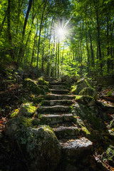 Step Into Nature (Mike Ver Sprill - Milky Way Mike) Tags: step nature stairs steps landscape sunrise light star burst beautiful green lush trees forest blue ridge parkway virginia