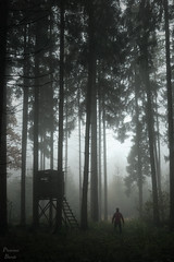 The show has begun (PhotonenBlende) Tags: tree trunk woods forest woodland haze foggy misty creepy spooky morning dew hunter scary