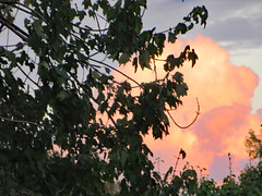 Tree Branches And A Pink Cloud. (dccradio) Tags: lumberton nc northcarolina robesoncounty outdoor outdoors outside tree trees greenery foliage leaf leaves branch branches treebranch treebranches cloud clouds sky nature natural scenic beauty beautiful godscreation godshandiwork september latesummer earlyautumn earlyfall tuesday evening canon powershot elph 520hs pink pinkclouds cottoncandyclouds
