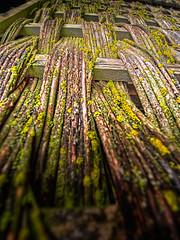 LangfordWovenFence - Copy (iankellybn26dj) Tags: uk england wiltshire closeup macro texture wood natural rustic