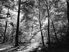 Rays (Horizon Enterprises) Tags: hike hiking netherlands nederland holland dutch veluwe gelderland national park wandelen hiken bw rays zonnestralen zon trees bomen arbre trail pad route hoge otterlo hoenderloo guelders