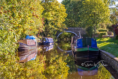 SJ1_1726 - Newton Grange moorings... (SWJuk) Tags: england unitedkingdom swjuk uk gb britain yorkshire northyorkshire banknewton canal leedsliverpoolcanal water flat calm reflections trees leaves foliage golden gold 2018 sep2018 autumn bridge towpath narrowboats boats barges light sunlight nikon d7200 nikond7200 18300mm rawnef lightroomclassiccc