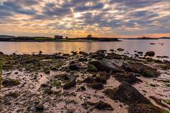 Pelham Bay Boulders (johnny4eyes1) Tags: epiclight shoreline sunup sunrise algae bronx dawn landscape pelhambaypark boulder boulders dramaticlight stones shore