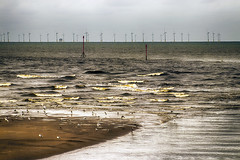 Aftermath of the gales (Gill Stafford) Tags: gillstafford gillys image photograph wales northwales denbighshire rhyl beach wind farm turbine electricity gulls sea seaside resort holiday