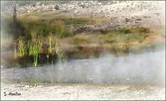 Hot Spring - Yellowstone (Suzanham) Tags: wyoming geyser steam hotspring yellowstone volcano montana