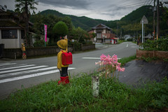 Nerine? Lycoris? (Yasuyuki Oomagari) Tags: rural country countryside pink character japan roadside kyushu kumamoto nikon d850 zeiss distagont1435 日本 九州 熊本県 田舎 横断歩道 キャラクター 花