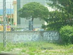 1168 (en-ri) Tags: moue fra crazy bianco old vecchio sbiadito nero pisa wall muro graffiti writing throwup lilla