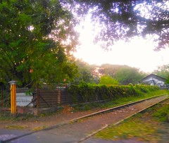 Secluded! (manasidhavale5) Tags: random flowers indianphotographer india secluded green road rails