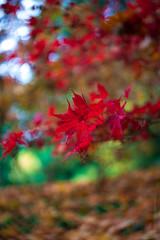 DSC00529 (www.mikereidphotography.com) Tags: zeiss leaf leaves fallcolors 50mm 135mm bokeh dof selectivefocus
