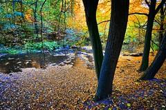 Golden autumn (Tobi_2008) Tags: herbst autumn landschaft landscape wald forest sachsen saxony deutschland germany allemagne germania